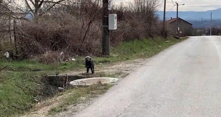 Il difficile salvataggio del cagnolino Bak
