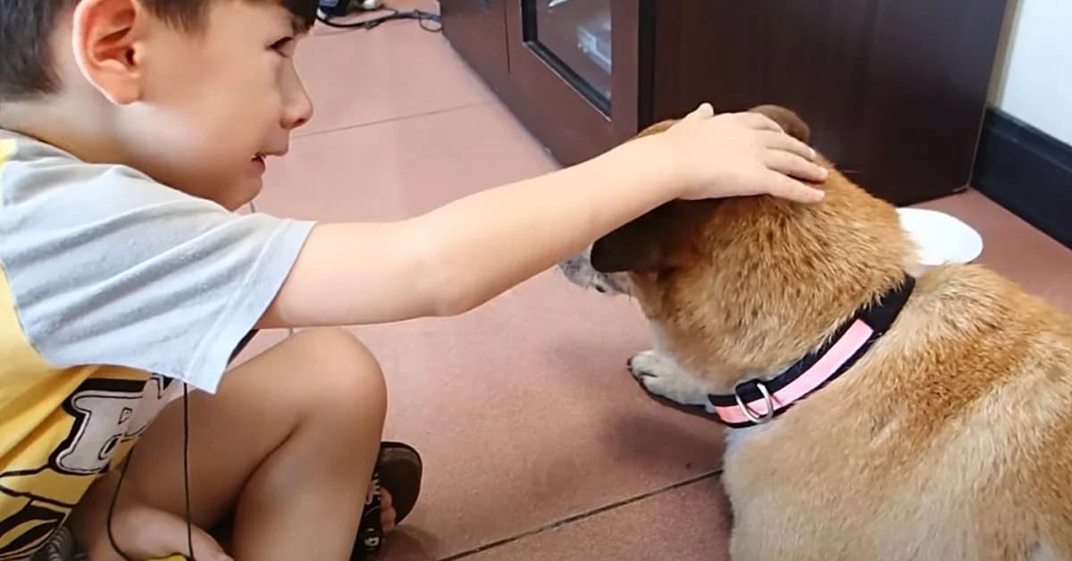 La triste storia del cane BaoBao