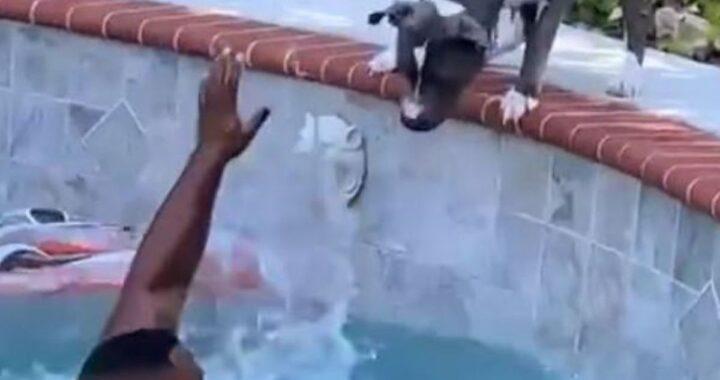 Il video del cane Boogie