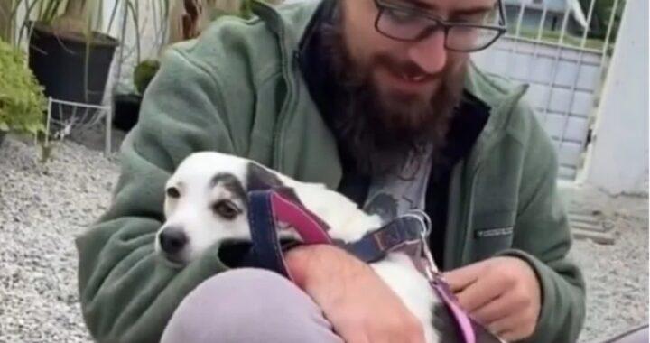 Branquinha, la cucciola dal cuore ferito mostra i suoi traumi passati