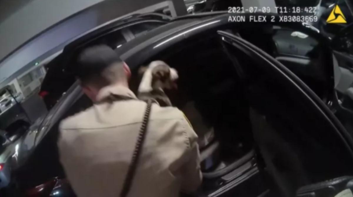 Il salvataggio di una cagnolina e del suo cucciolo