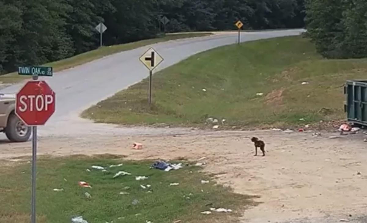 Cane abbandonato video