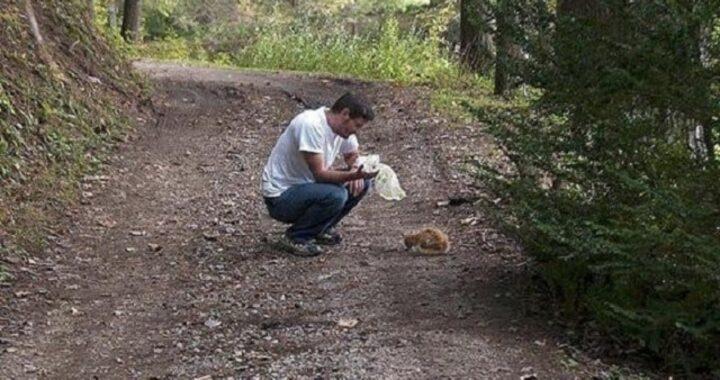 La storia del gattino Cheeto, raccolto per strada da un uomo dal cuore grande