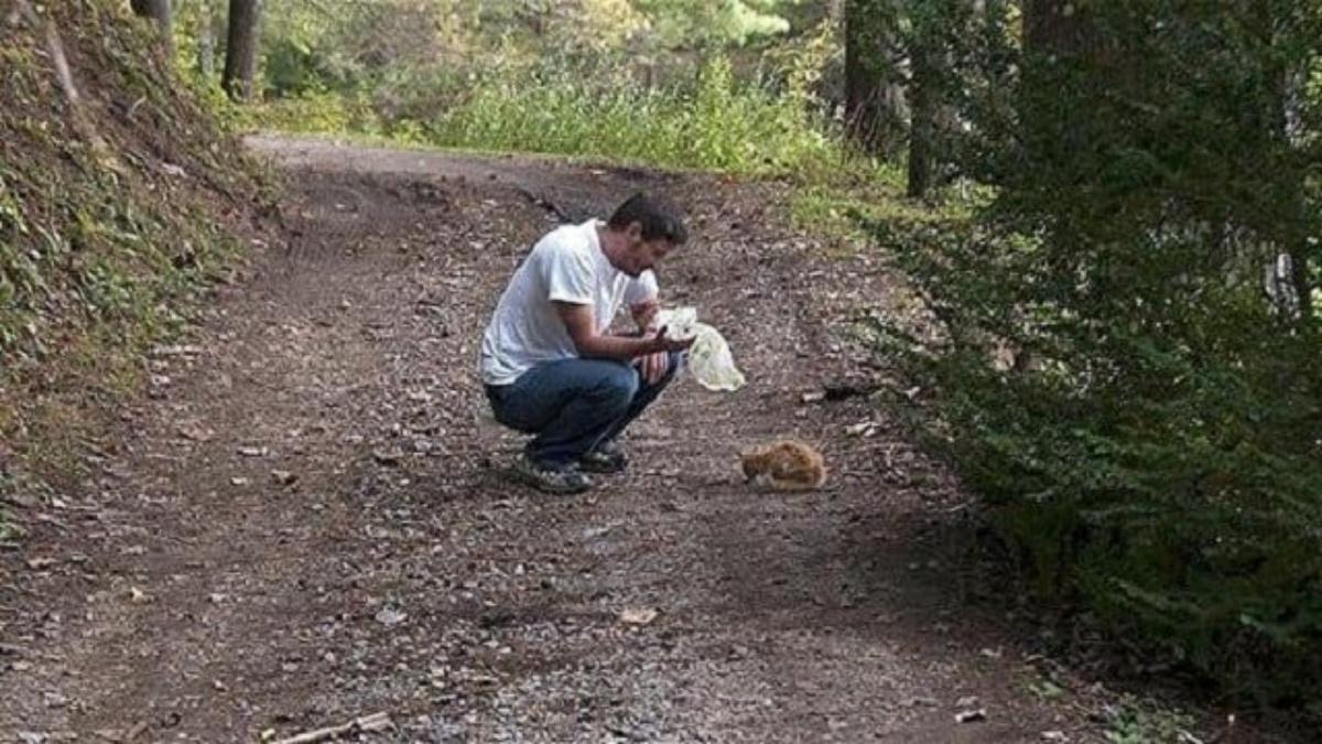 La storia del gattino Cheeto