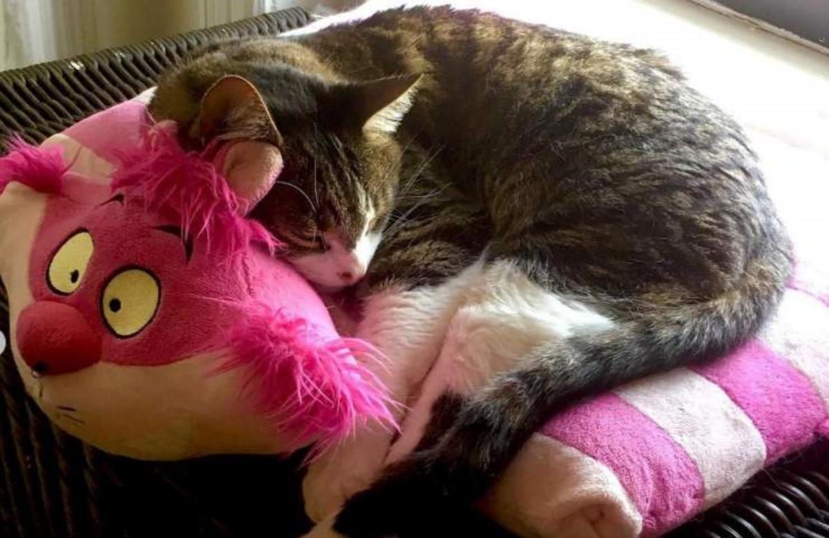 Il gatto di ClioMakeup ha il tumore
