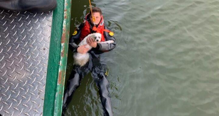 Cucciolo cade nel fiume e il suo proprietario si tuffa per salvarlo