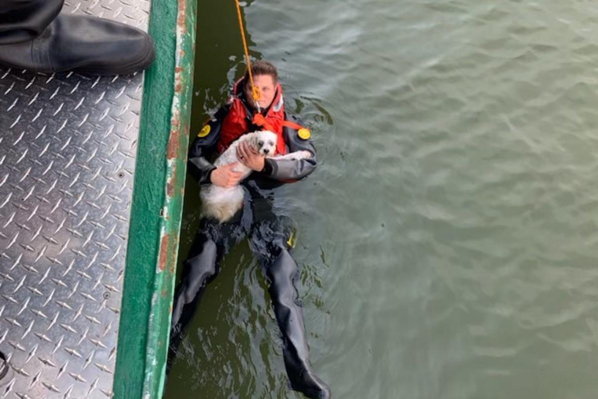uomo si tuffa nel fiume per salvare il suo cucciolo