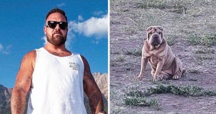 La storia della cagnolina Darla