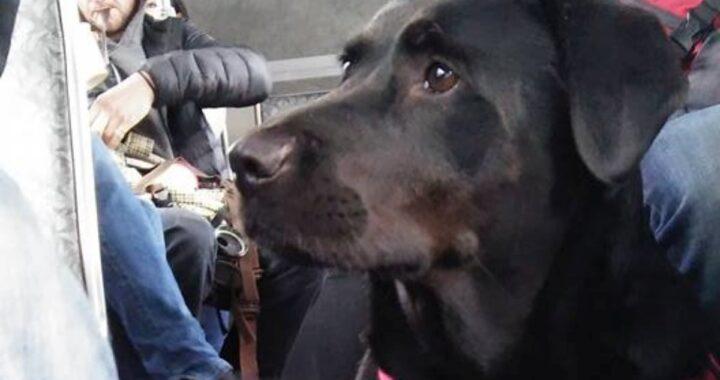 Il cane guida Eclipse