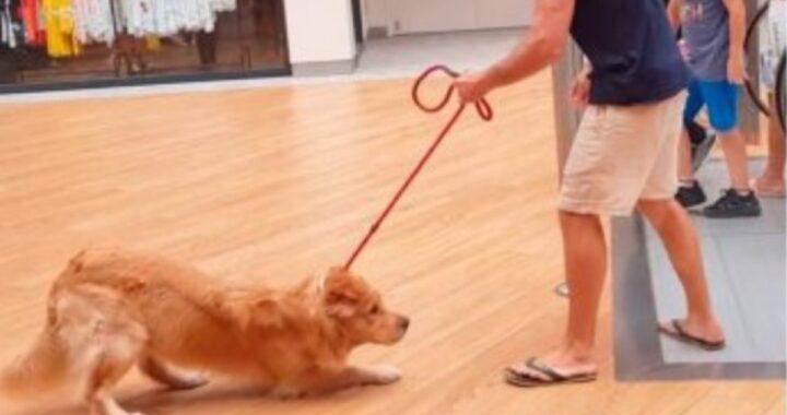 La fobia del cagnolino Google