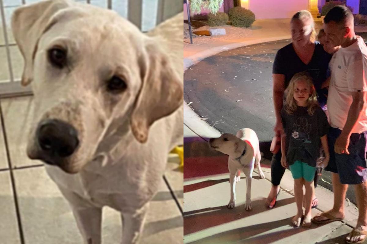 Grazie a Gracie, la famiglia Reinert è sana e salva