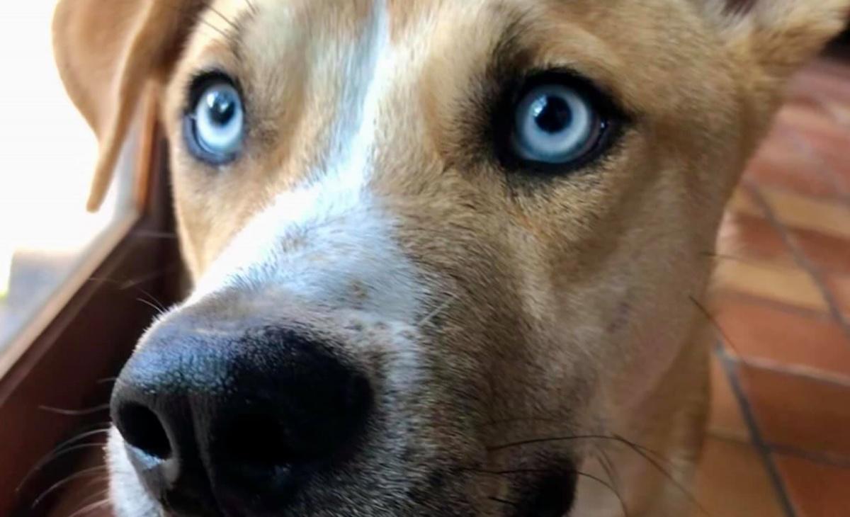 Il post del cane Hank