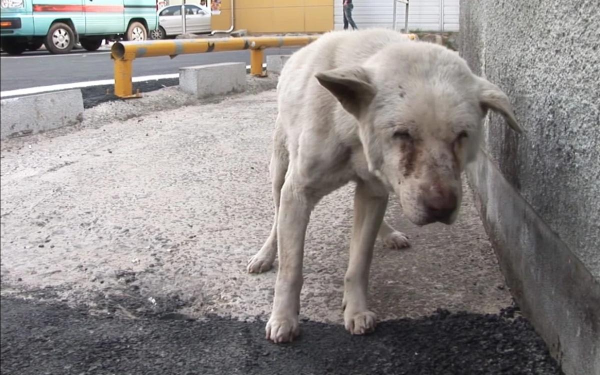 La triste storia del cane Jindol