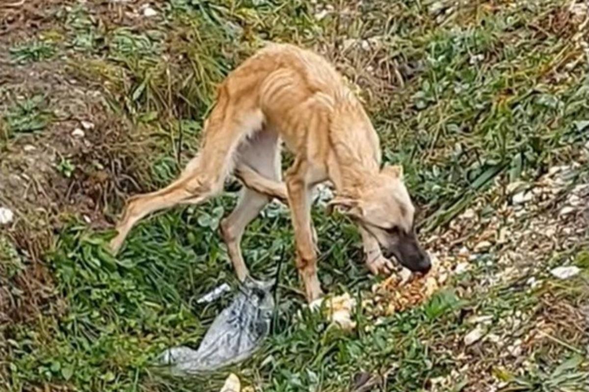 Kola Kariola salva centinaia di cani  dalla vita di strada
