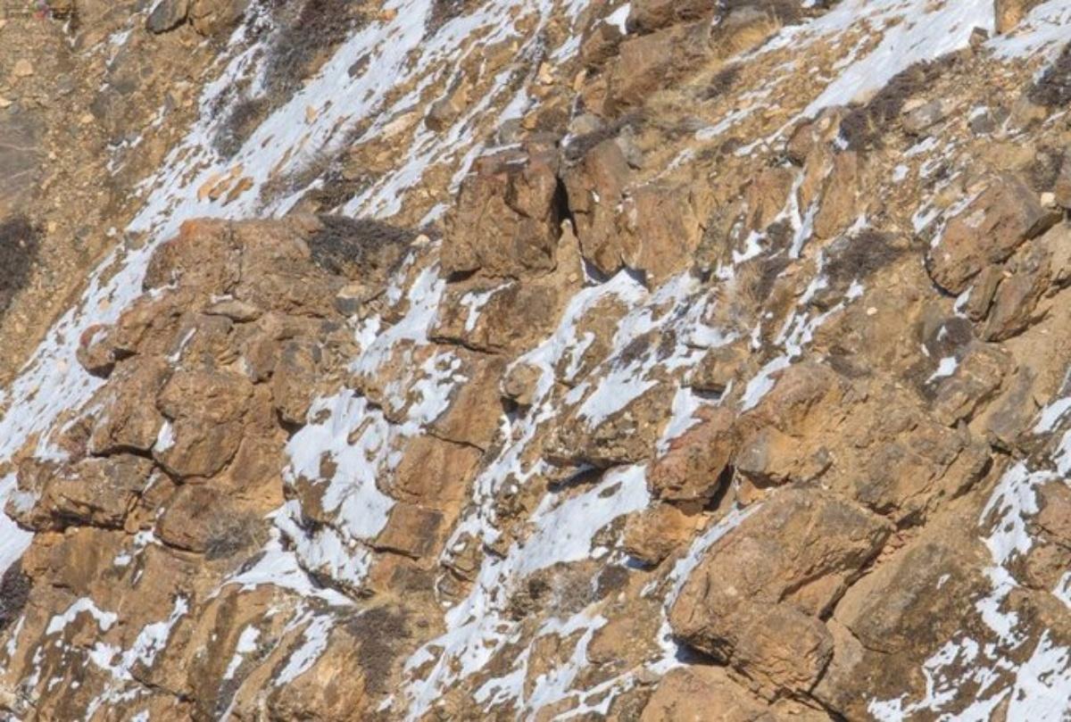 Il gioco del leopardo delle nevi