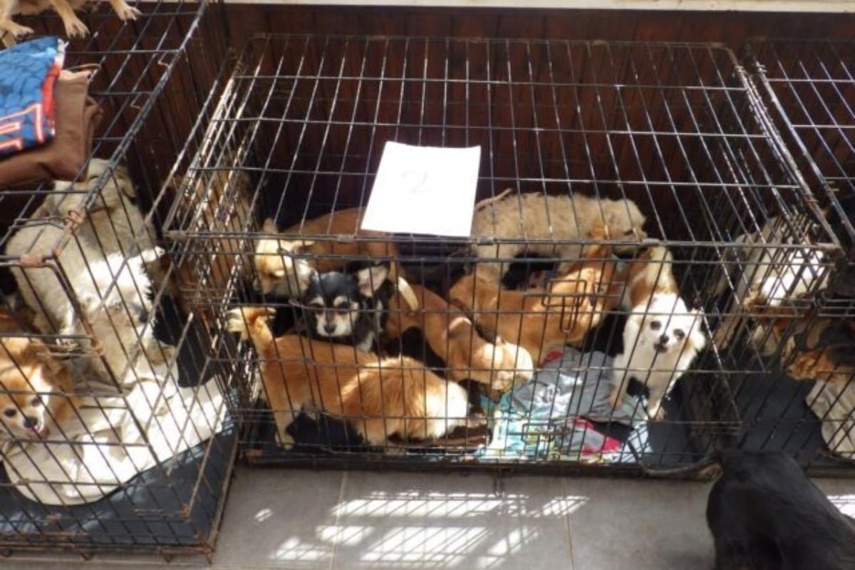Lynn Stoker's Cruelty to Animals