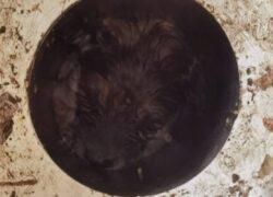 L'incredibile salvataggio del cagnolino Mister T
