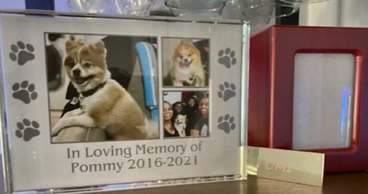 La tragedia del cagnolino Pommy
