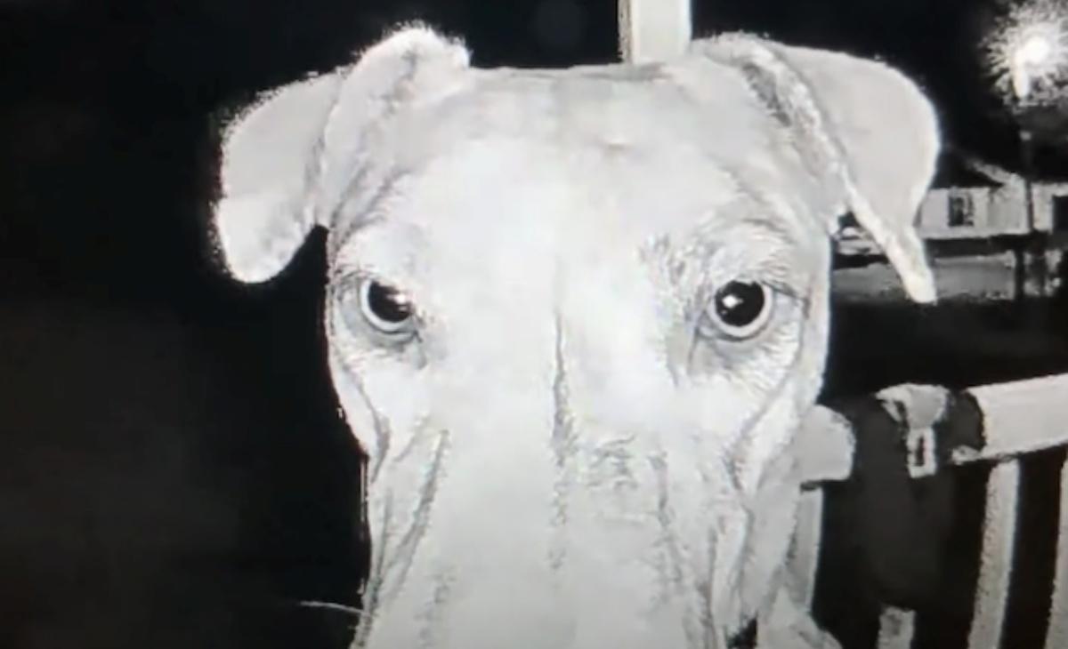 Il simpatico video del cane Rajah