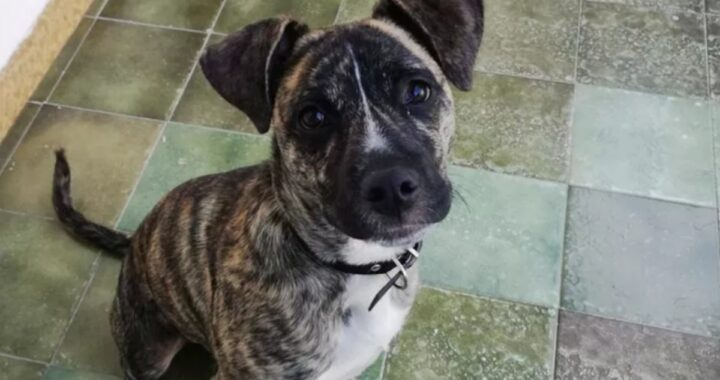 La storia del cane Rei, morto di dolore dopo l'abbandono della sua famiglia
