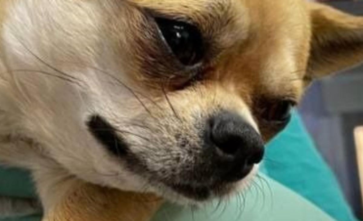 Intervento per il cane Taquito di Romina Power