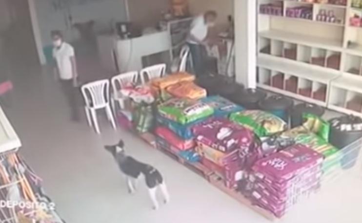 Cagnolino randagio entra nello studio del veterinario a chiedere aiuto