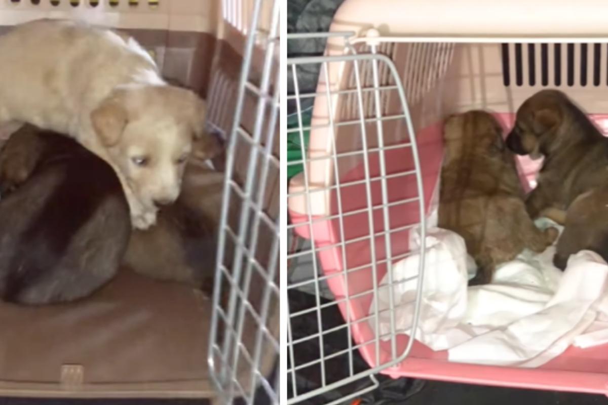 abbandonati 4 cuccioli