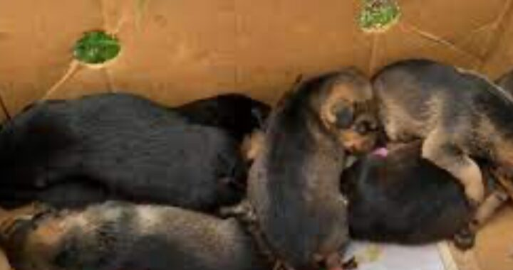abbandonati 6 cuccioli