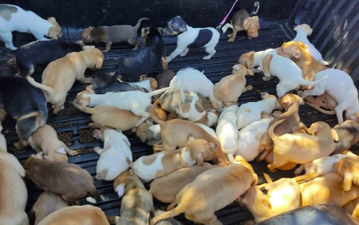 Animali sopravvissuti in condizioni disumane