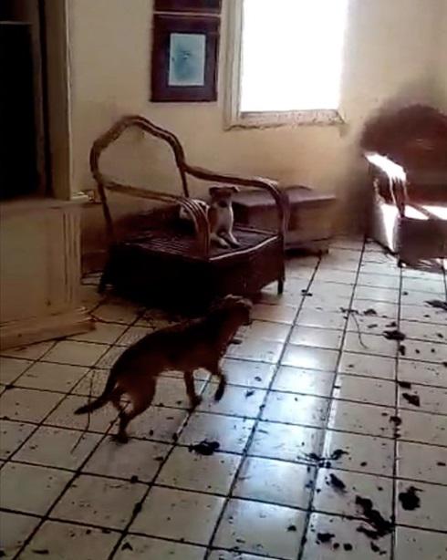 Cani maltrattati