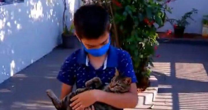 Bimbo di 9 anni salva il gatto