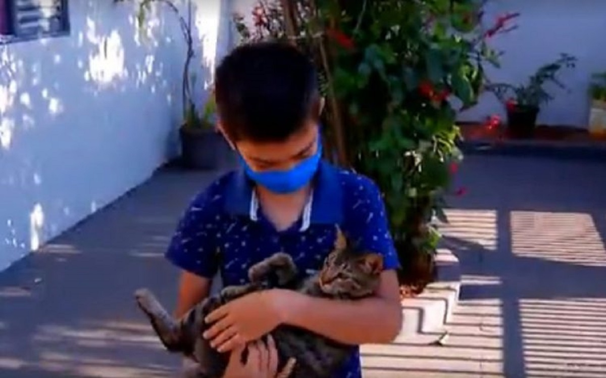 9 year old boy saves the cat