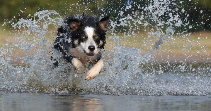 Bimbo salvato da un cane bagnino