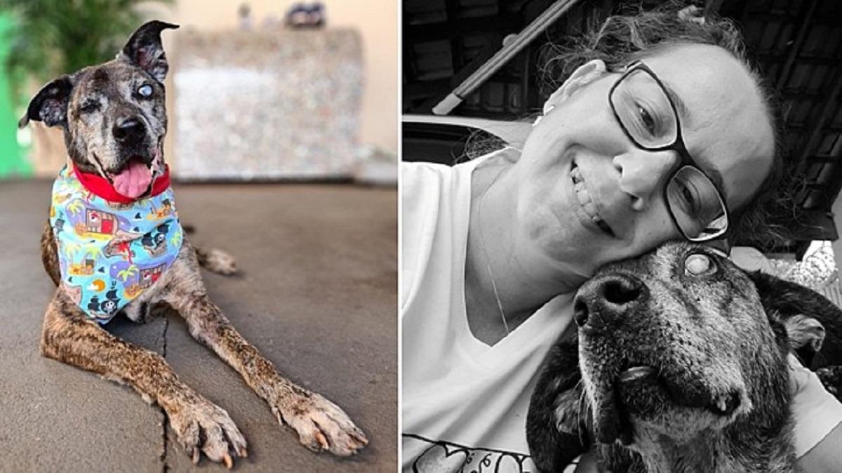 Cane anziano, cieco e amputato adottato