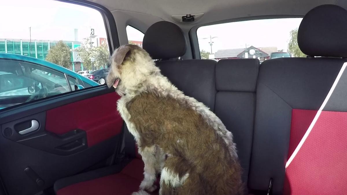 Cane chiuso in auto esperimento