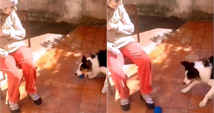 Cane e anziana signora giocano insieme