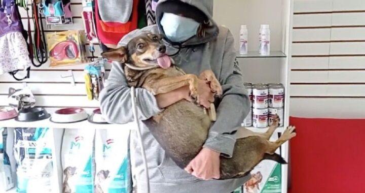 Cane inseguito dalla Polizia