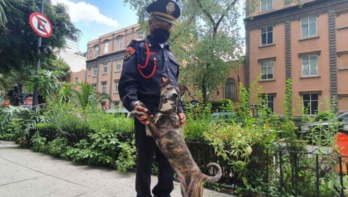 Il poliziotto e il cucciolo