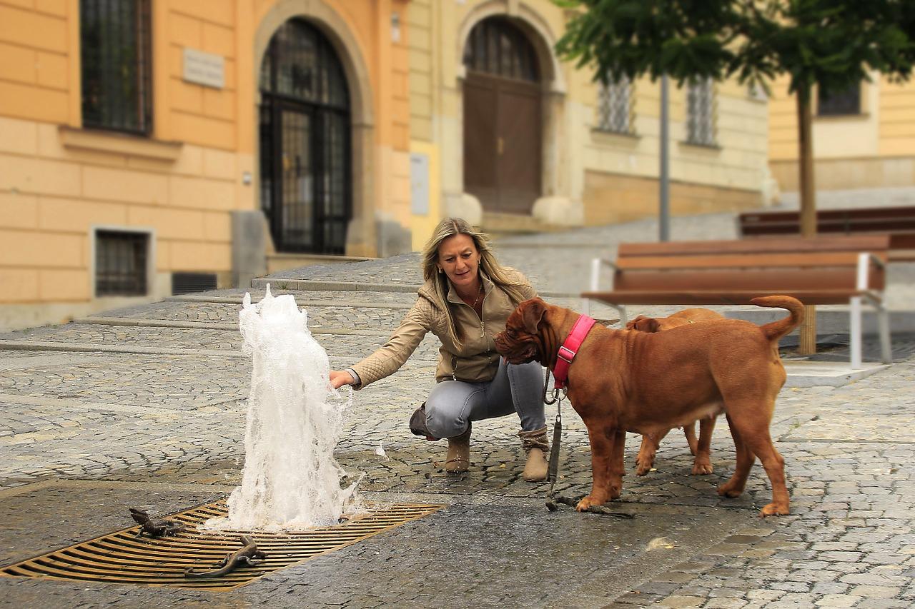 donna e cane aggrediti
