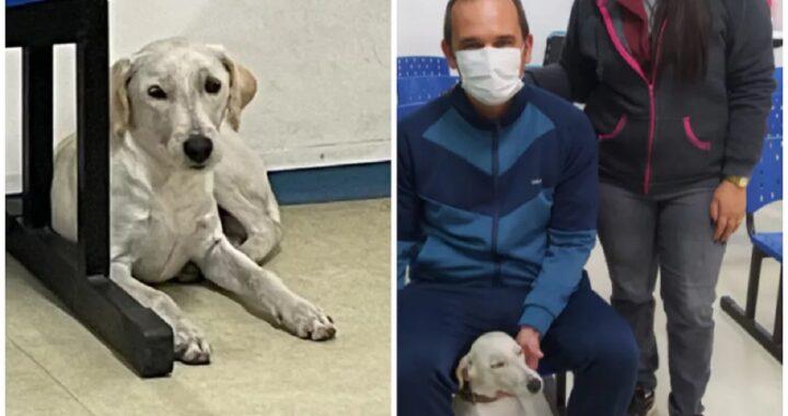 Cucciolo adottato dopo che il suo proprietario è morto