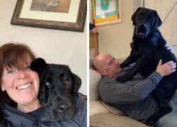 Cucciolo fa ridere i proprietari