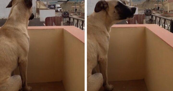 Cucciolo piange sul balcone
