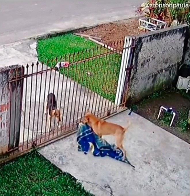 Copertina dei cani