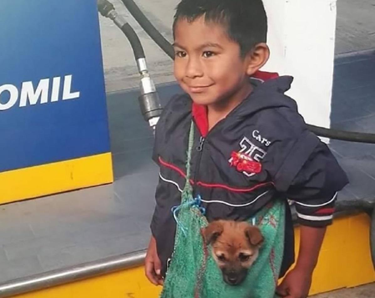 Cucciolo trasportato nella borsetta dal bambino