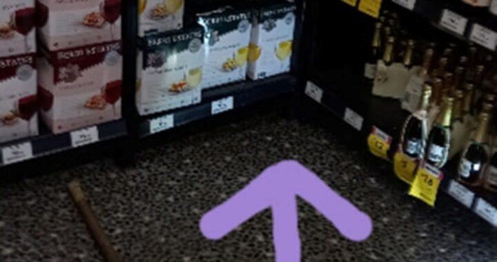 Echidna si intrufola in un negozio