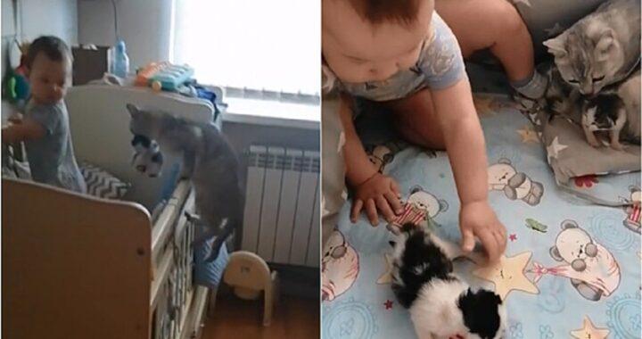 Gatta porta i micini dal bambino per fare conoscenza