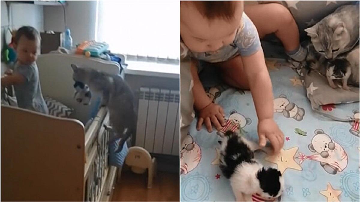 Gatta porta i micini dal bambino