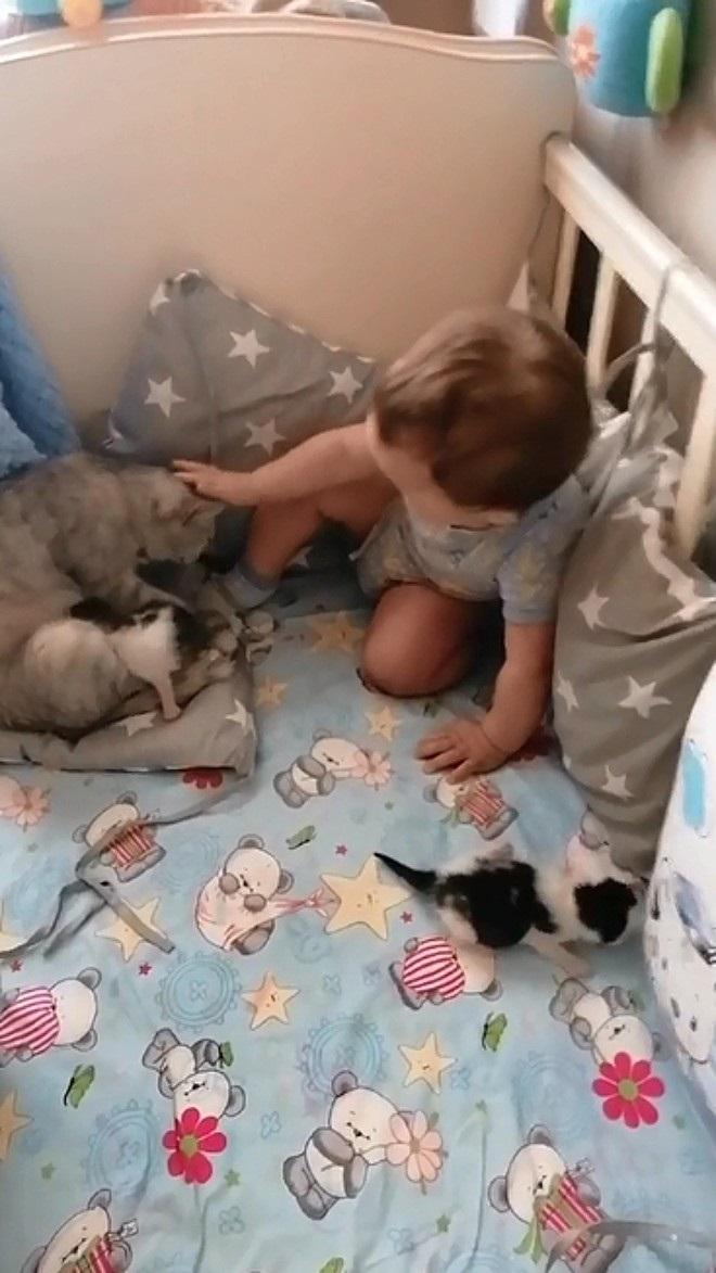 Gattini e neonato