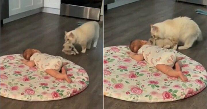 Gatta presenta il cucciolo al neonato di casa