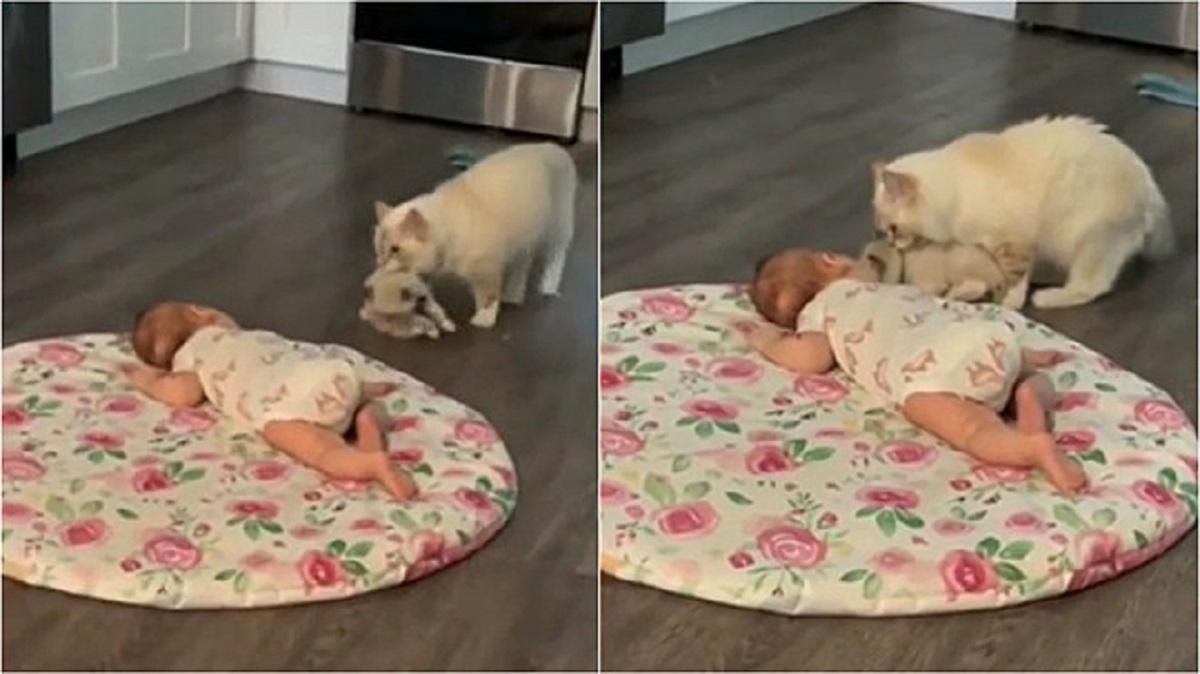 Gatta presenta il cucciolo
